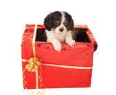 Surpresa de cachorrinho para o natal — Fotografia Stock