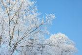 Frost blanco — Foto de Stock