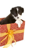 Christmas present puppy — Stock Photo
