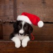 Hello puppy with christmas — Stock Photo #14310923