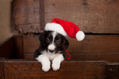 Hello puppy with christmas — Stock Photo