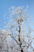 Hoarfrost tree — Stock Photo