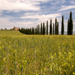 Royalty-Free Stock Photo: Tuscan villa