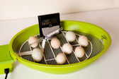 Eggs in an incubator — Stock Photo