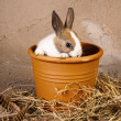 Shy rabbit in flowerpot — Stock Photo