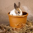 Shy rabbit in flowerpot — Stock Photo #19410619