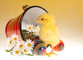 Easter chick and bucket — Zdjęcie stockowe