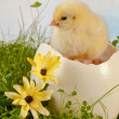 Stock Photo: Hatching in garden
