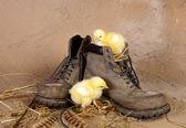 Filhotes em uma bota velha — Foto Stock