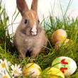 Stock Photo: Easter bunny with eggs