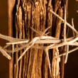 Bible and crown of thorns — Stock fotografie