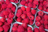 Beautiful raspberries — Stock Photo