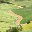 Fields of Tuscany — Stock Photo