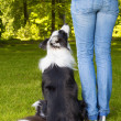 Dog looking up to his boss - Foto Stock