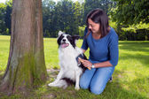 Grooming the dog — Stock Photo