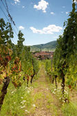 Alsace wine village — Stock Photo