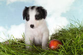 Sheepdog puppy in the garden — Stock Photo