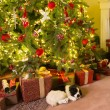 Stock Photo: Presents under the christmas tree
