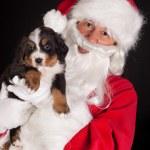 Puppy gift from santa — Stock Photo #33117507