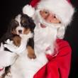 Puppy gift from santa — Stock Photo