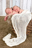 Twin baby basket — Stock Photo