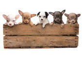 Crate full of dogs — Stock Photo