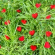 Little hearts in a meadow — Stock Photo