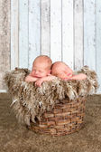 Vintage basket with twin babies — Stock Photo