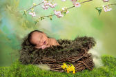 Sleeping african spring baby — Stock Photo