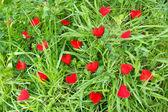 Little hearts in a meadow — Stock Photo