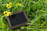 Ecology message in grass — Stock Photo
