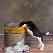 Dog looking in garbage can — Stock Photo