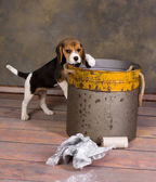 Puppy and garbage bin — Stock Photo