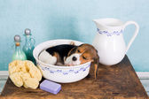 Puppy in washtub — Stock Photo