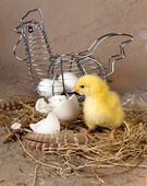 Easter basket with eggs and chick — Stock Photo