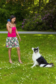 Playing fetch with a border collie dog — Stock Photo