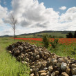 Boulders and poppies in Tuscany — Stock Photo #46785099