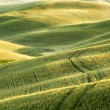 Tracks and lines in Tuscany — Stock Photo