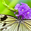 Stock Photo: Butterfly close up