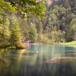 Stock Photo: Lake in woods