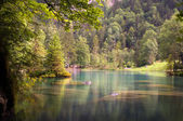 Lake in the woods — Stock Photo