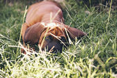Dog in the grass — Stock Photo