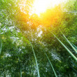 Bamboo — Stock Photo #15330243