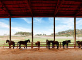 Stables and horses — Stock Photo