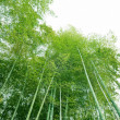 Bamboo — Stock Photo