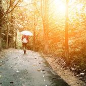 Vrouw wandelen in het bos — Stockfoto