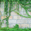 Stock Photo: Japanese creeper