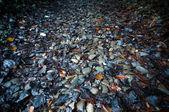 Cobblestone path — Stock Photo