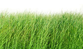 Grass — Stock Photo