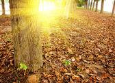 лес в сумраке — Стоковое фото
